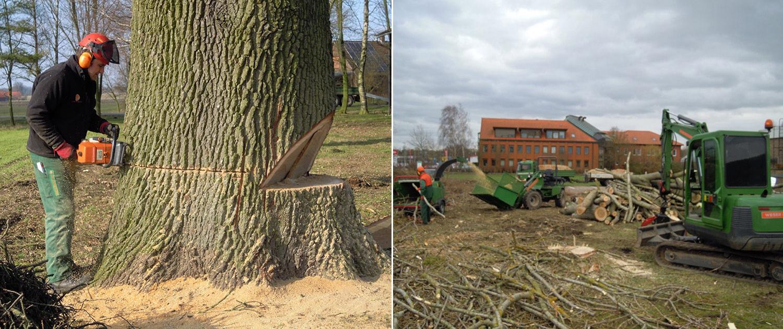 Weser Gartenbau - Baumfällung